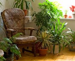 Indoor Plants That Clear Toxins